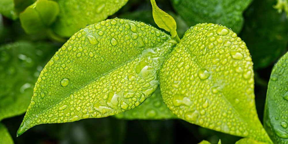 leaf-1001679_1920
