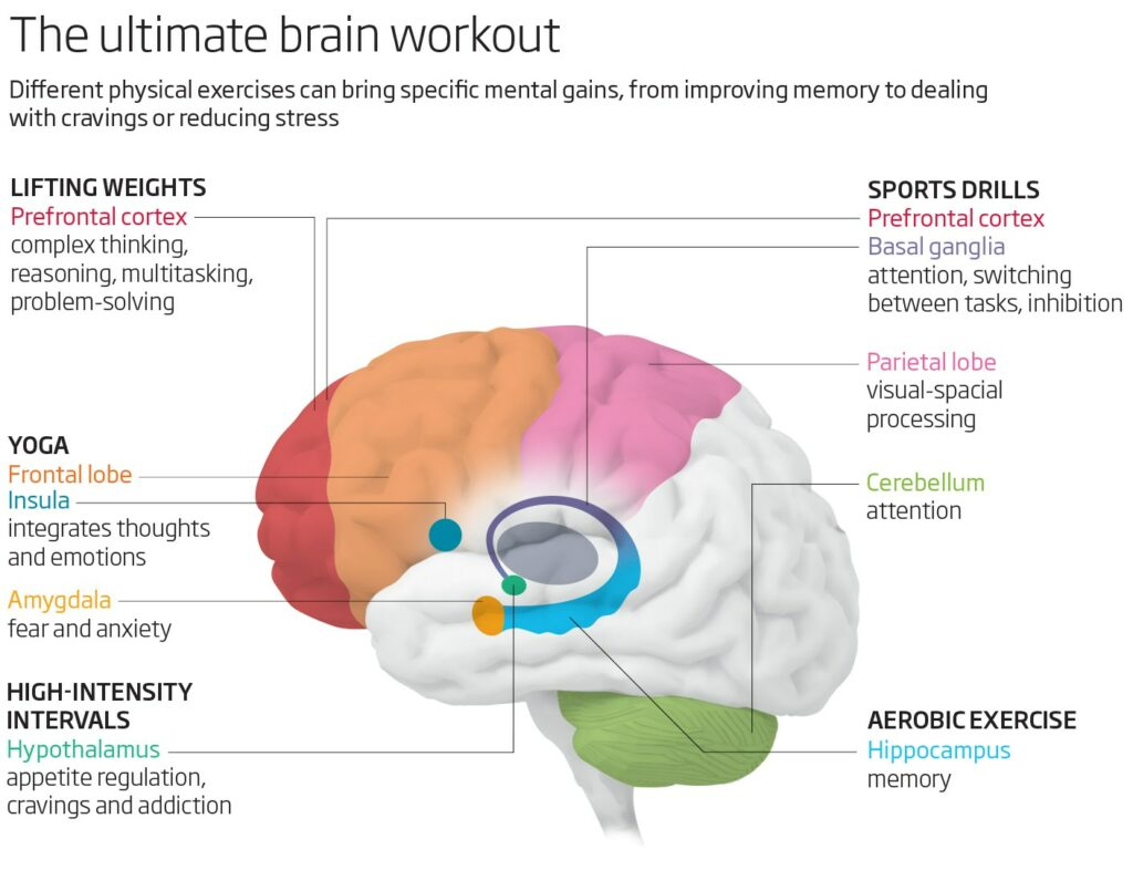 brain 760